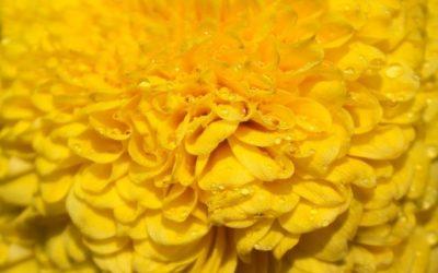 Il significato dei colori: il giallo