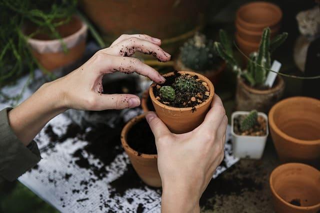 Arte del giardinaggio, un calmante per l'anima