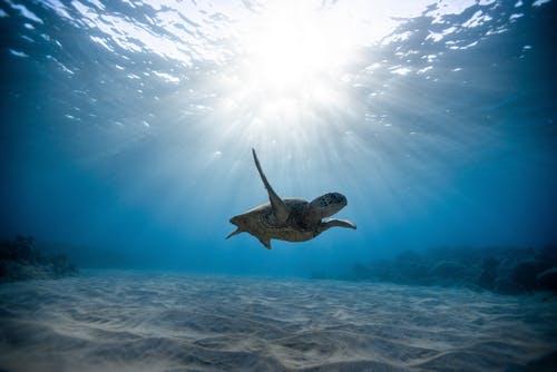 La tartaruga e la sua simbologia